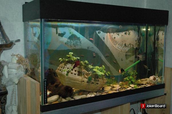 Аквариум своими руками рыбки в аквариуме