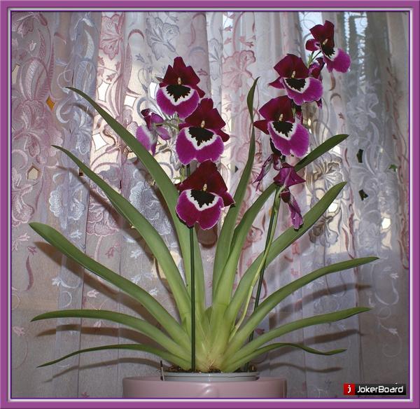 Комнатные цветы энциклопедия в картинках 7